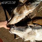Feeding deer!