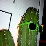 Kactus Cafè