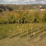 View of Vineyards From Room Window