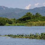 Black River Scenery