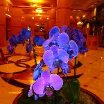 Blue orchid in the hotel lobby