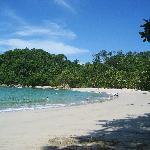 Rainforest meets the shoreline