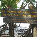"Sign on the beach:  ""Do Not Feed the Monkeys"""
