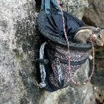 Layon, the pet squirrel who lives in a chalk bag