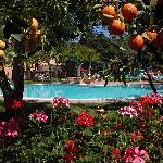 Swimming Pool & Citrus Grove Garden