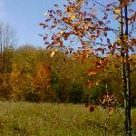 View of Woods in autumn