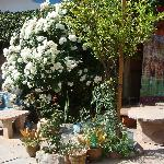 Rose bushes - patio