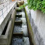 Nearby fish ladder for salmon