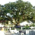 Liberty Tree Hilton Head Harbour Town