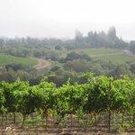 Foto de Iron Horse Vineyards
