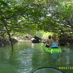 going through the mangroves