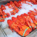Must have!  Lobster!