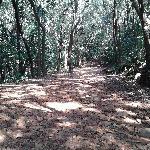 Walkways thru the Woods