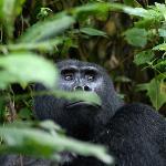Provided by: Uganda Wildlife Service