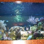 Lobby area fish tank
