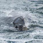 Walbeobachtung von Land