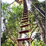 Rope ladder in the jungle!! Do it!!
