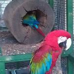 Great collection of Macaws