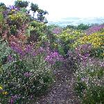 Summer in the Quantock Hills