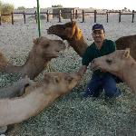 oh,so friendly camels!