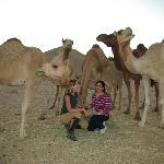 camels,camels!