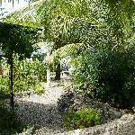 Dolphin House Gardens