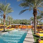 The Saguaro Scottsdale - Picante Pool