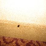 Beetle in my room