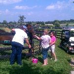 A trip to a retired horse farm!