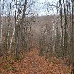 promenade dans le bois