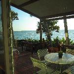 Sanderling view  2