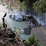 varietà di rocce laviche e piante