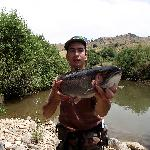 Rainbow trout 62CM caught above Azrou