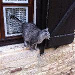 French cat just wandering around peoples' homes