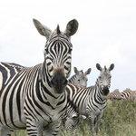 Il Parco Nazionale di Nairobi