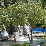 Jungle theme pool area