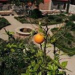 Medieval Mediteranean Garden