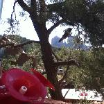 hummingbirds and cathedral rock at breakfast