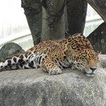 Zoologico en el Parque del Este
