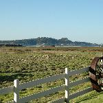 sheep meadow and Point Lobos