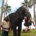 Elefantenreiten im Hotelgarten
