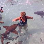 Sharks !!!