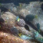 Foto de Cabo Pulmo Dive Center