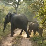 12 elephants crossing the road