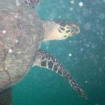 sea turtle we swam with