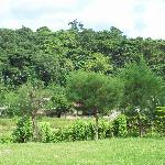 View of the fields from the resort