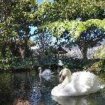 Quinta Lake with swans