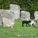 Lambs among the stones