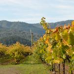 Adjacent vineyard