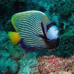 Constance Moofushi Resort, Maldives - Diving